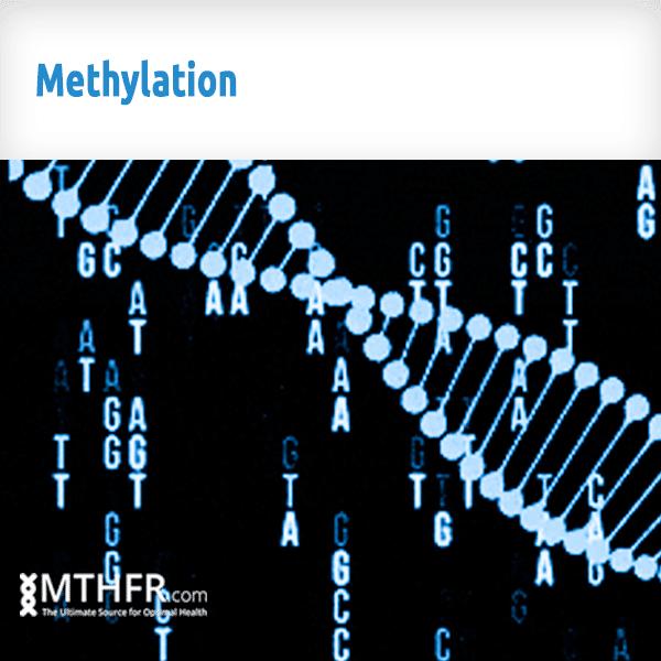 Methylation Banner